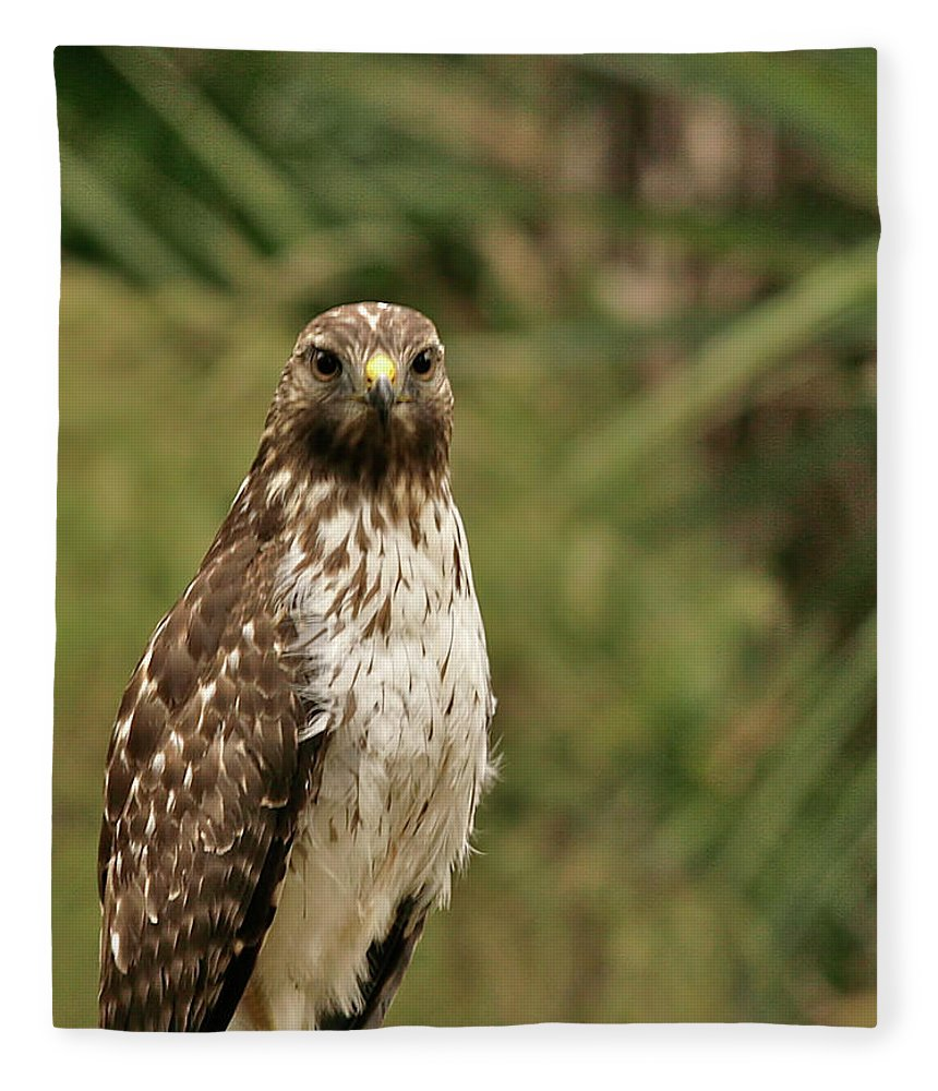 Bird Fleece Blanket featuring the photograph I See You by Phill Doherty
