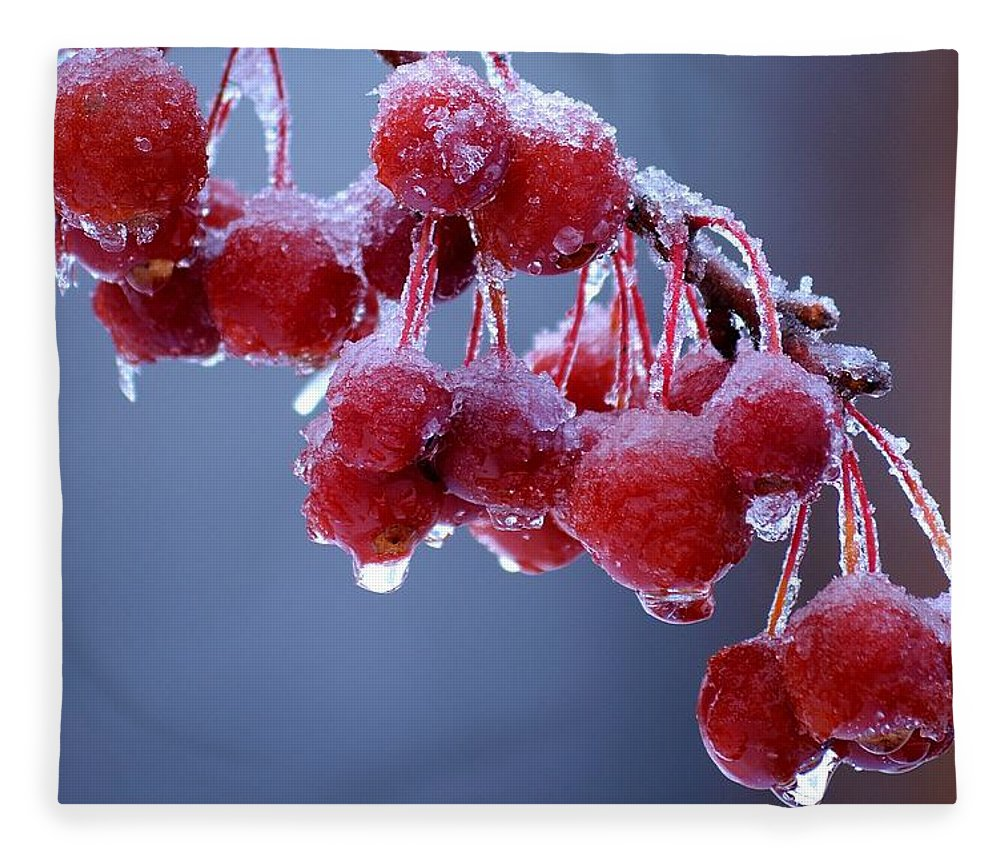 Winter Fleece Blanket featuring the photograph Icy Berries by Lisa Kane