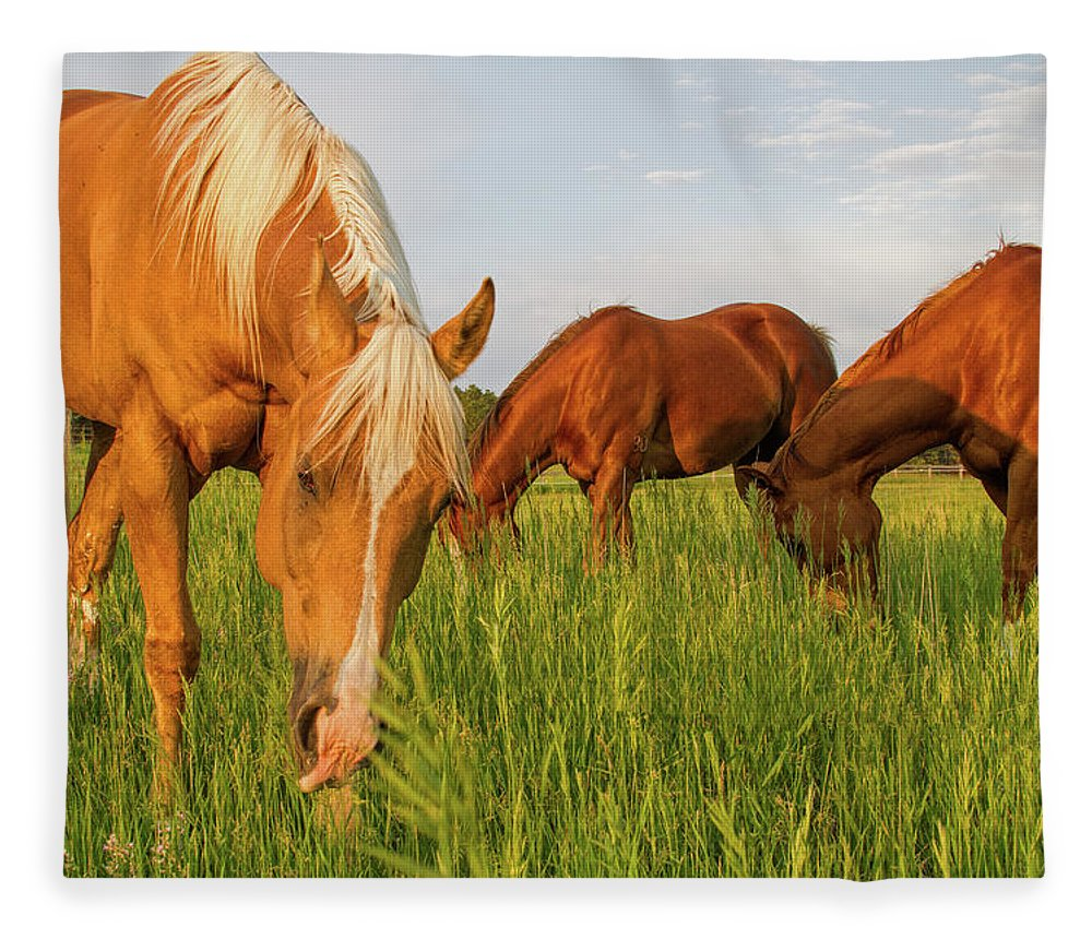 Quarter Horse Fleece Blanket featuring the photograph In The Grass by Alana Thrower