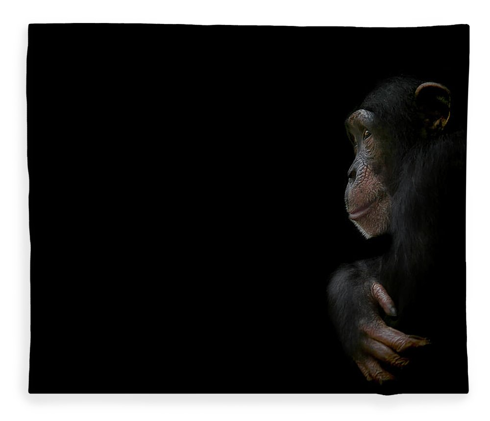 Chimpanzee Fleece Blanket featuring the photograph Innocence by Paul Neville