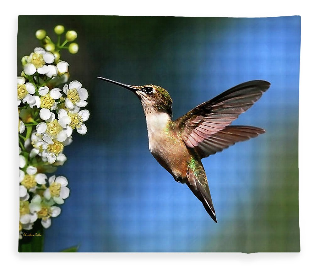 Hummingbird Fleece Blanket featuring the photograph Just Looking by Christina Rollo