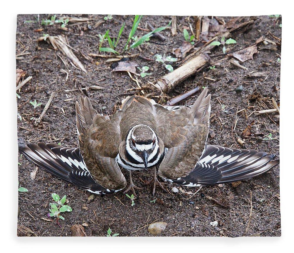 Bird Fleece Blanket featuring the photograph Killdeer 3076 by Michael Peychich