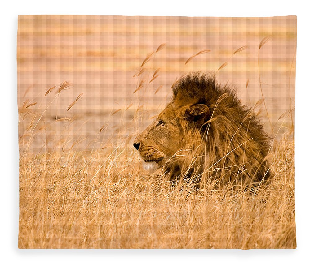 3scape Fleece Blanket featuring the photograph King of The Pride by Adam Romanowicz