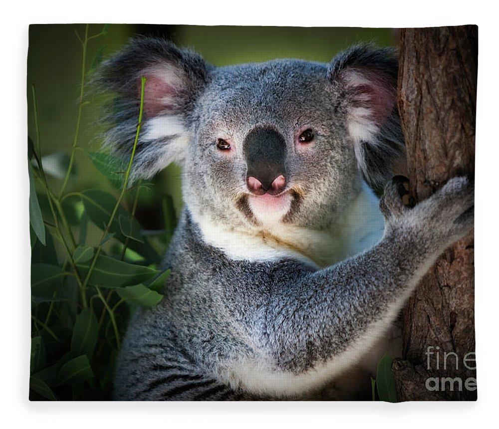Koala Bear Fleece Blanket featuring the photograph Koala by Doug Sturgess