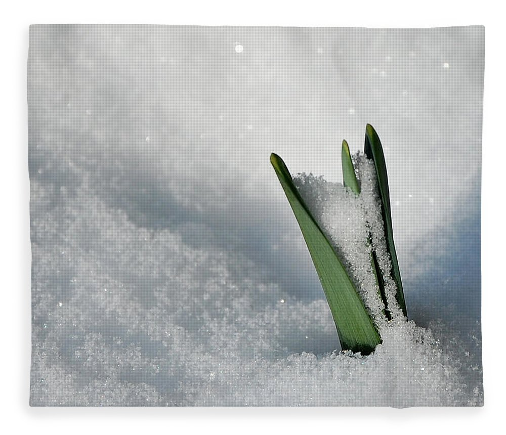 Spring Fleece Blanket featuring the photograph Late snow by Lisa Kane
