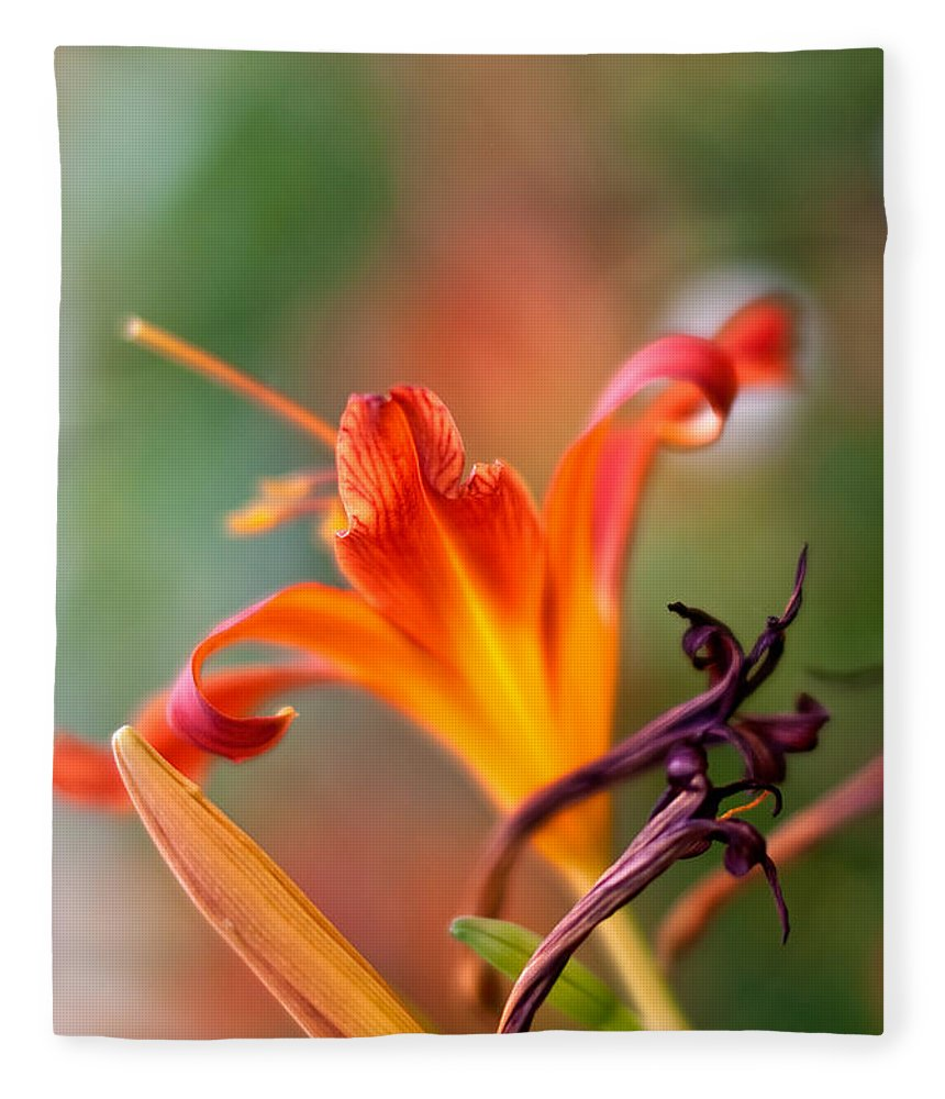 Lilium Fleece Blanket featuring the photograph Lilly Flowers by Nailia Schwarz