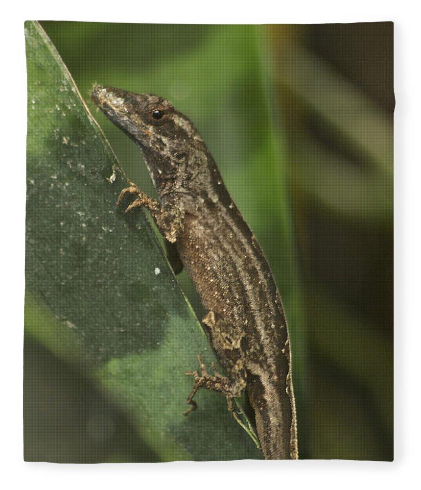 Wildlife Fleece Blanket featuring the photograph Lizard 3 by Michael Peychich