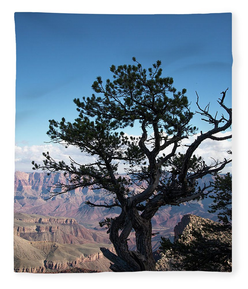 Grand Canyon National Park Fleece Blanket featuring the photograph Lone Tree 2 by Frank Madia