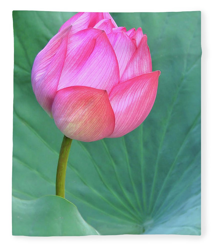 Waterlily Fleece Blanket featuring the photograph Lotus Flower by Delphimages Photo Creations