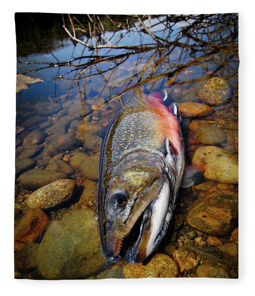 Maine Fleece Blanket featuring the photograph Maine Brookie by Kevin Couture