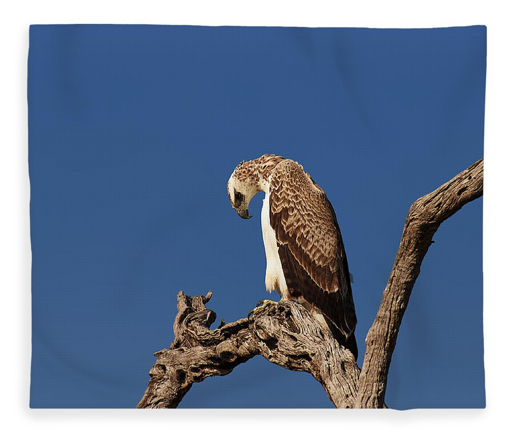 Martial Fleece Blanket featuring the photograph Martial Eagle by Johan Swanepoel
