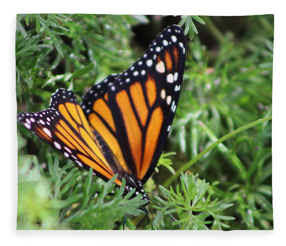 Monarch Butterfly Fleece Blanket featuring the photograph Monarch Butterfly In Lush Leaves by Colleen Cornelius