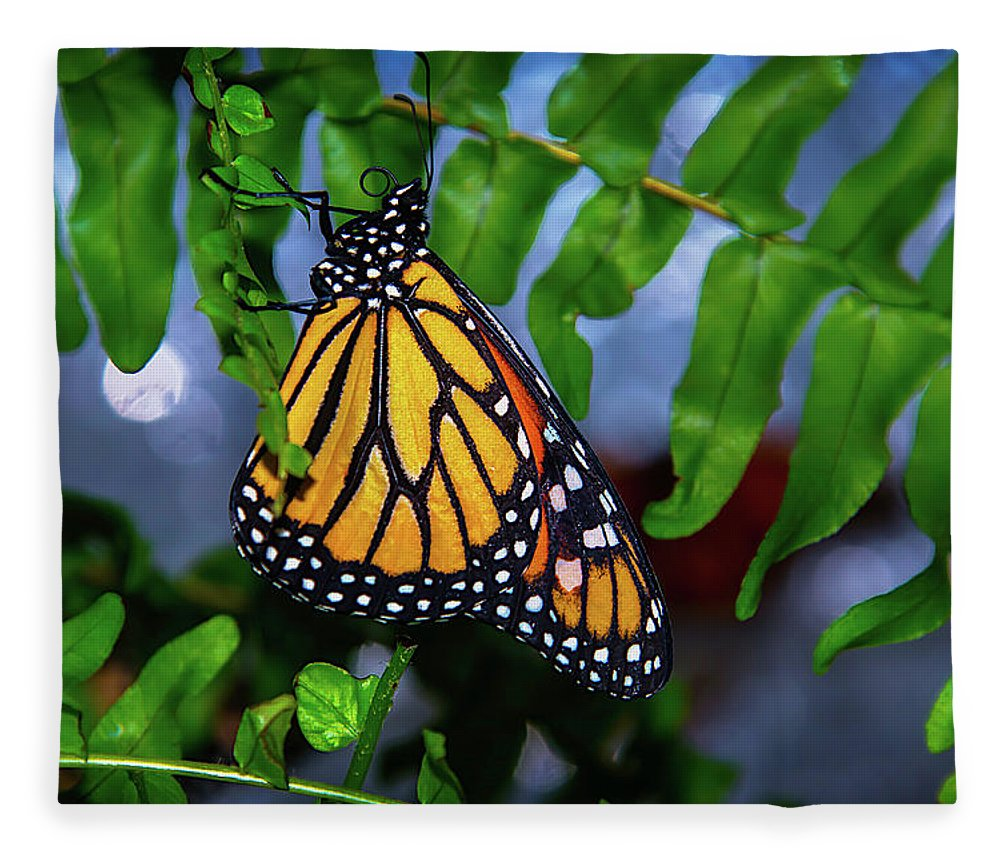 Hanging Fleece Blanket featuring the photograph Monarch Feeding by Garry Gay