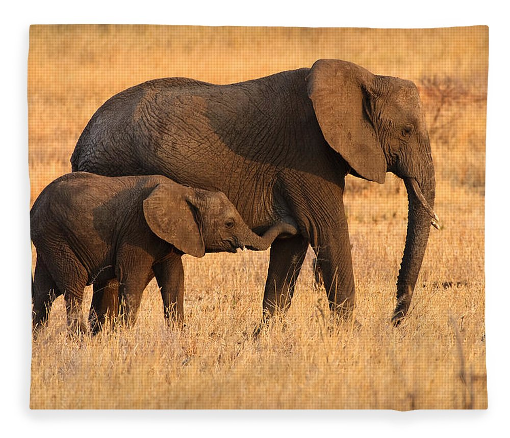 3scape Photos Fleece Blanket featuring the photograph Mother And Baby Elephants by Adam Romanowicz