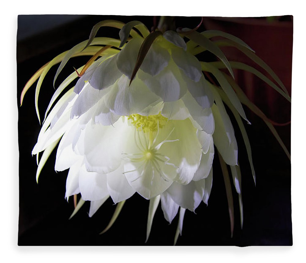 Flower Fleece Blanket featuring the photograph Night Blooming Cereus by Alana Thrower