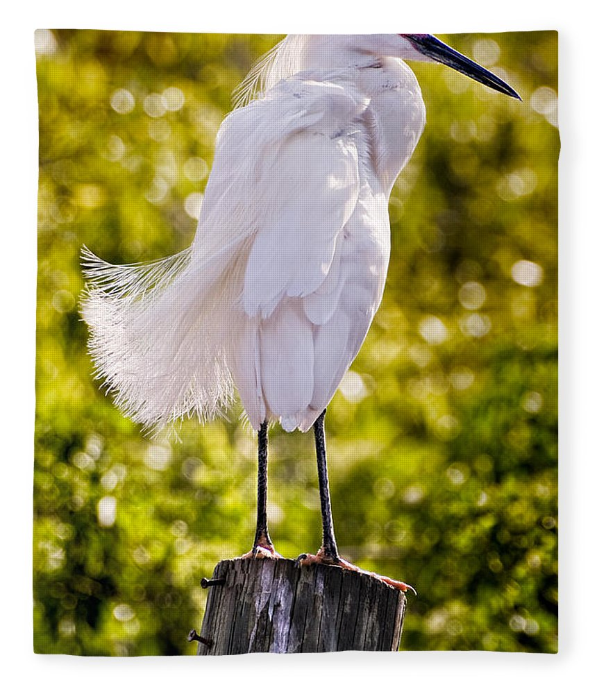 snowy Egret Fleece Blanket featuring the photograph On Watch by Christopher Holmes
