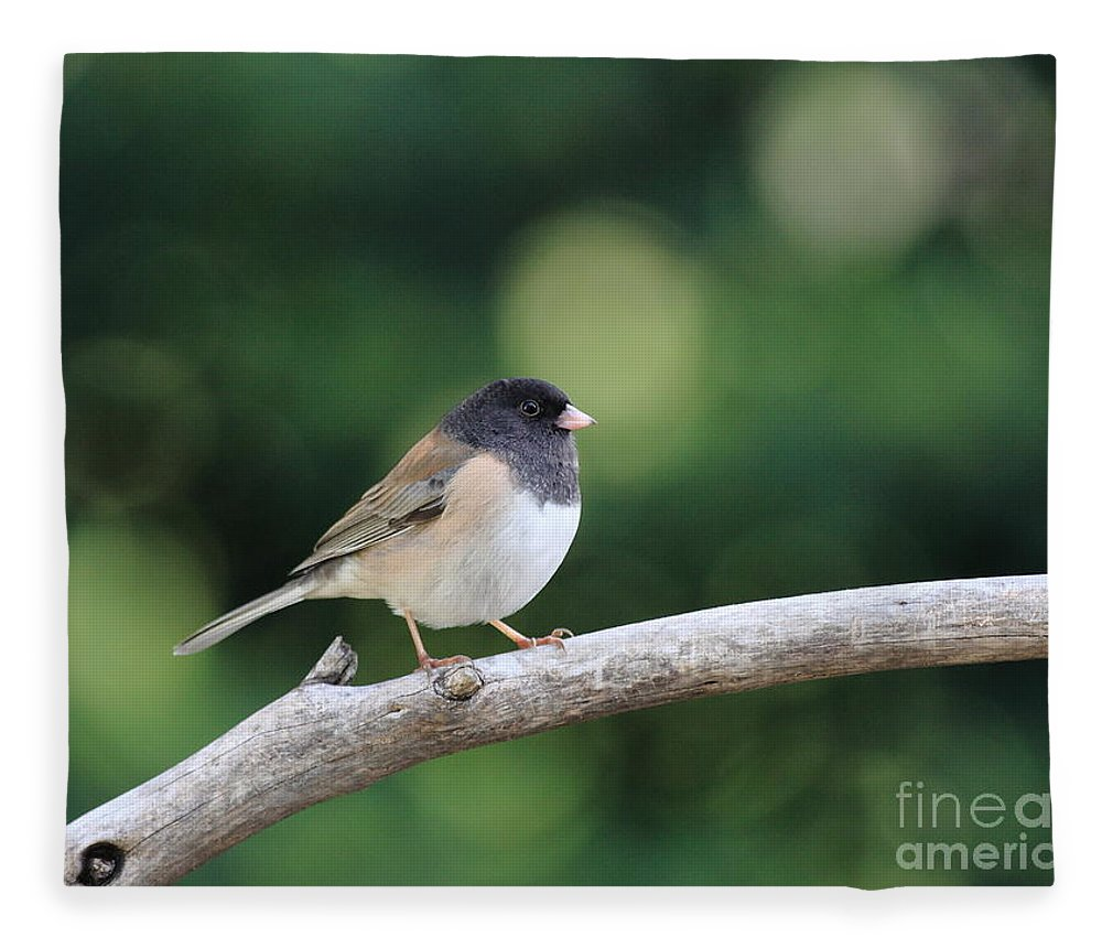 Wildlife Fleece Blanket featuring the photograph Oregon Junco by Wingsdomain Art and Photography