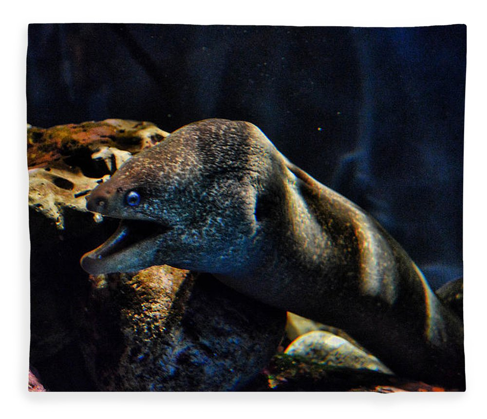 Eel Fleece Blanket featuring the photograph Pacific Moray Eel by Tommy Anderson