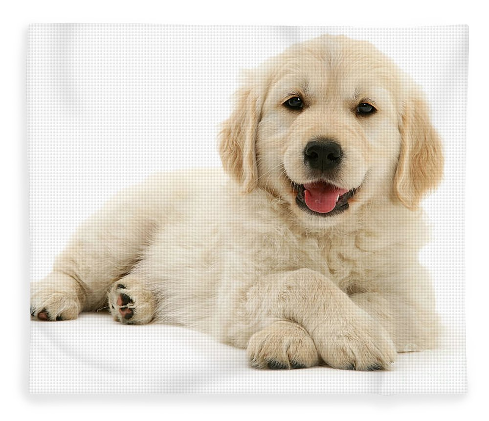 Golden Retriever Fleece Blanket featuring the photograph Paws Crossed Pup by Warren Photographic