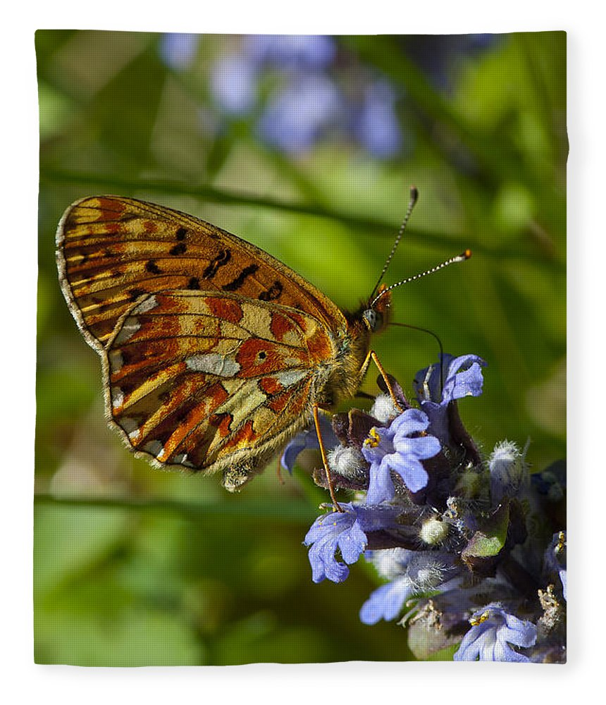 Pearl-bordered Fritillary Fleece Blanket featuring the photograph Pearl-bordered Fritillary by Steen Drozd Lund