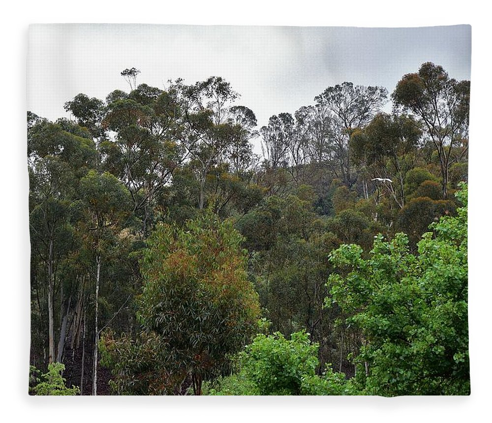 Linda Brody Fleece Blanket featuring the photograph Peters Canyon In The Rain 8 by Linda Brody