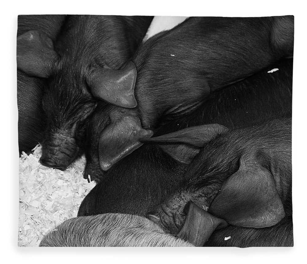 Pig Fleece Blanket featuring the photograph Pig Pile by Cathy Mahnke