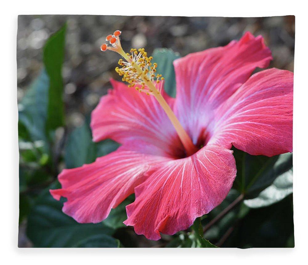 Pink hibiscus flower fleece blanket for sale by aimee l maher alm hibiscus fleece blanket featuring the photograph pink hibiscus flower by aimee l maher alm gallery izmirmasajfo