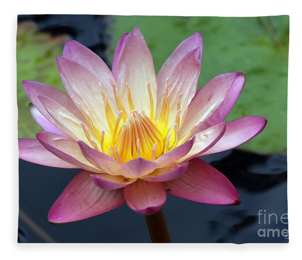 Wildflower Fleece Blanket featuring the photograph Pink Water Lily by Teresa Zieba