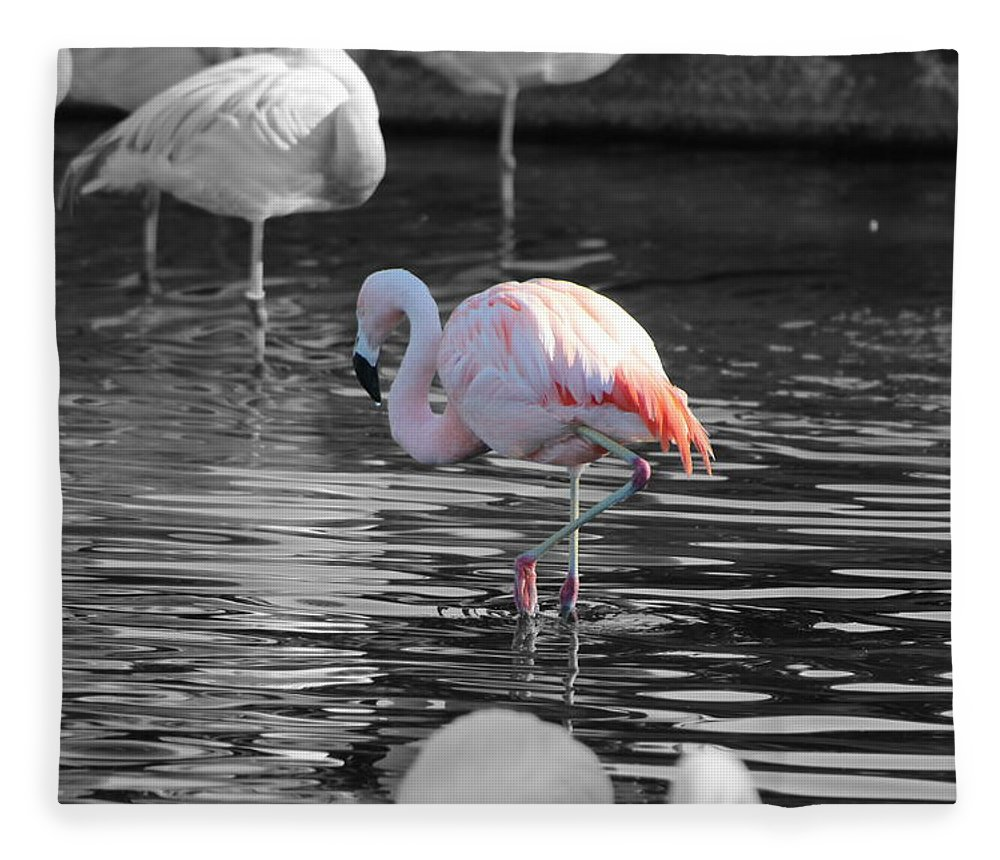 Palm Desert California Fleece Blanket featuring the photograph Pinky by Colleen Cornelius