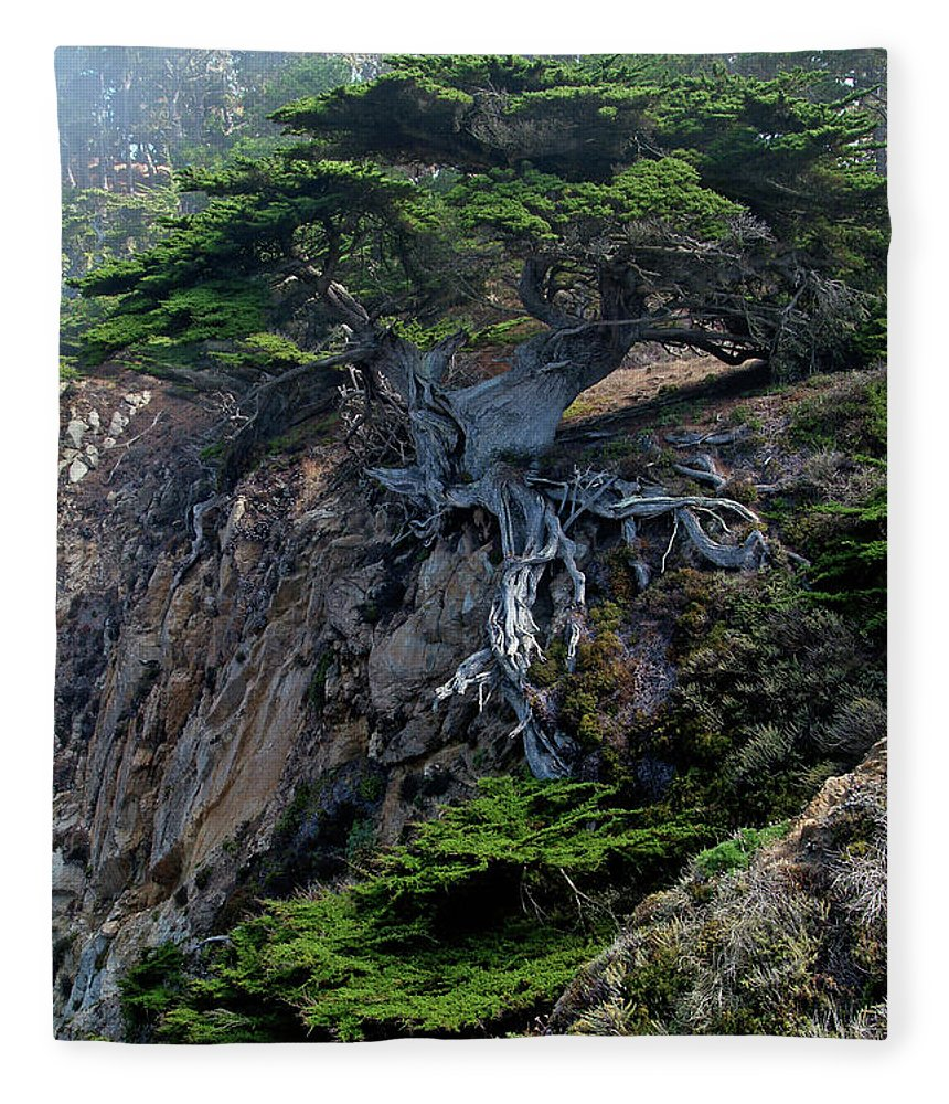 Landscape Fleece Blanket featuring the photograph Point Lobos Veteran Cypress Tree by Charlene Mitchell