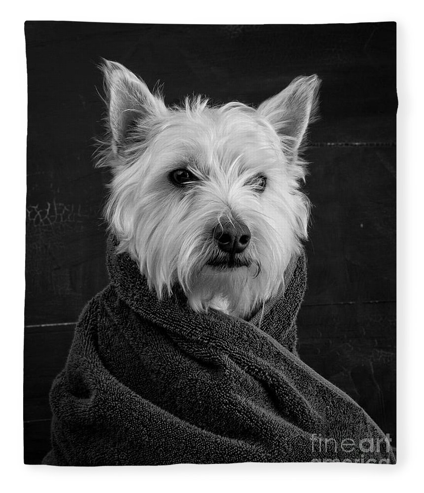 Portrait Of A Westie Dog Fleece Blanket featuring the photograph Portrait of a Westie Dog by Edward Fielding