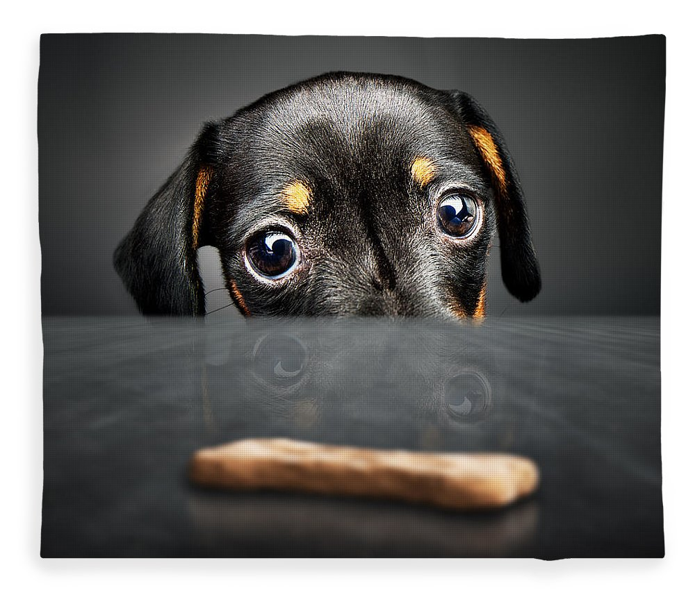Puppy Fleece Blanket featuring the photograph Puppy Longing For A Treat by Johan Swanepoel
