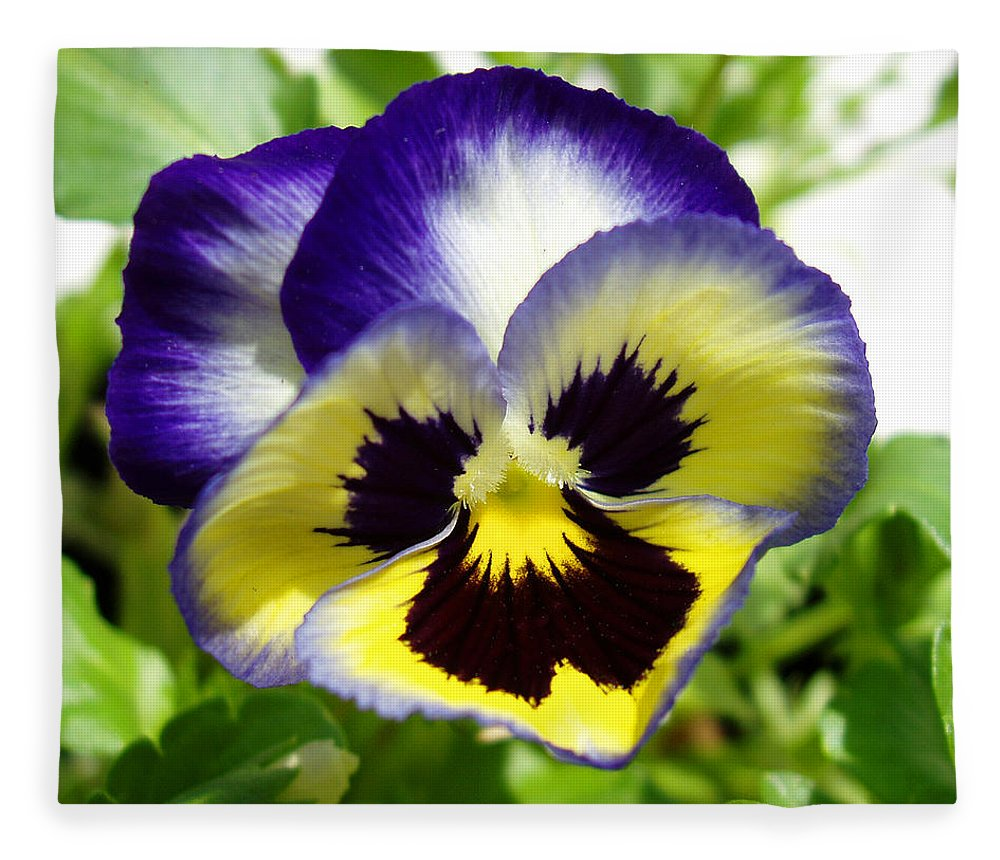 Pansy Fleece Blanket featuring the photograph Purple White And Yellow Pansy by Nancy Mueller