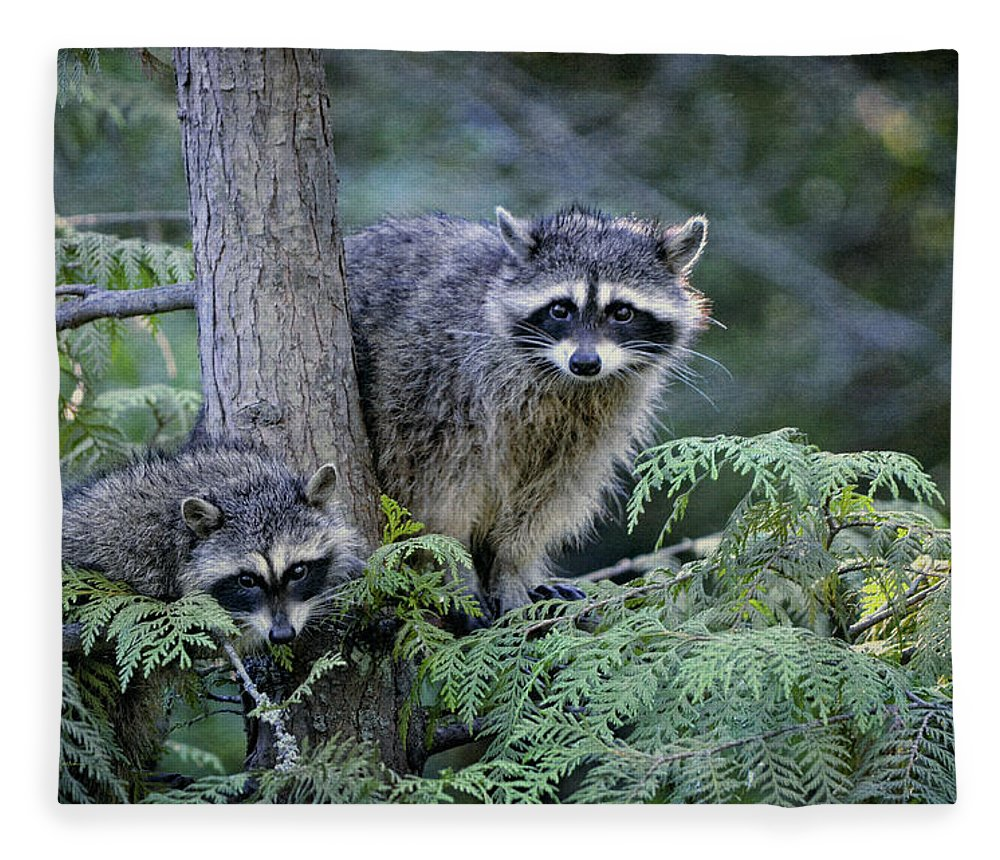 Raccoons Fleece Blanket featuring the photograph Raccoons In Stanley Park by Maria Angelica Maira