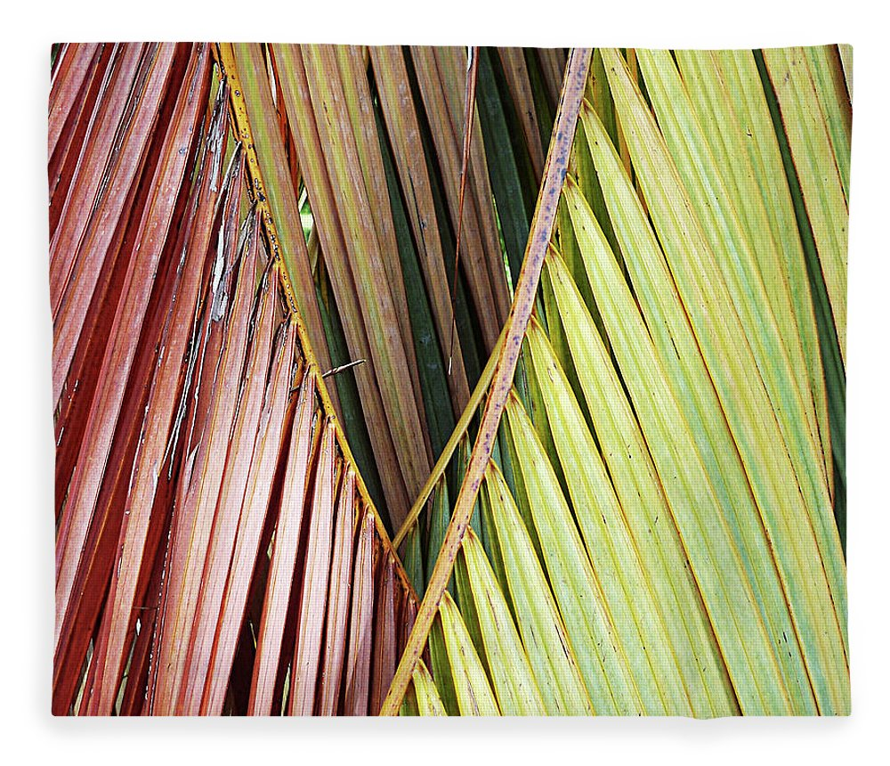 Florida Fleece Blanket featuring the photograph Rainbow Of Palms Gp by Chris Andruskiewicz