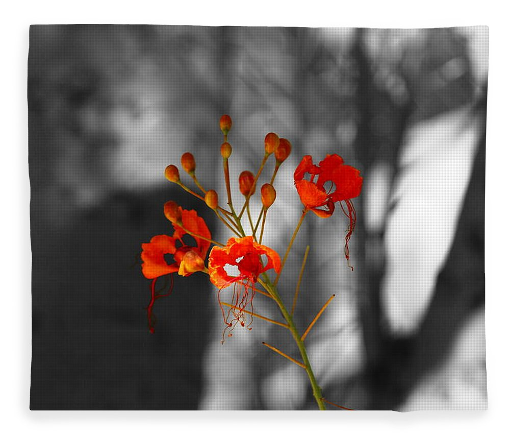 Crimson Red Fleece Blanket featuring the photograph Red Bird Of Paradise by Colleen Cornelius