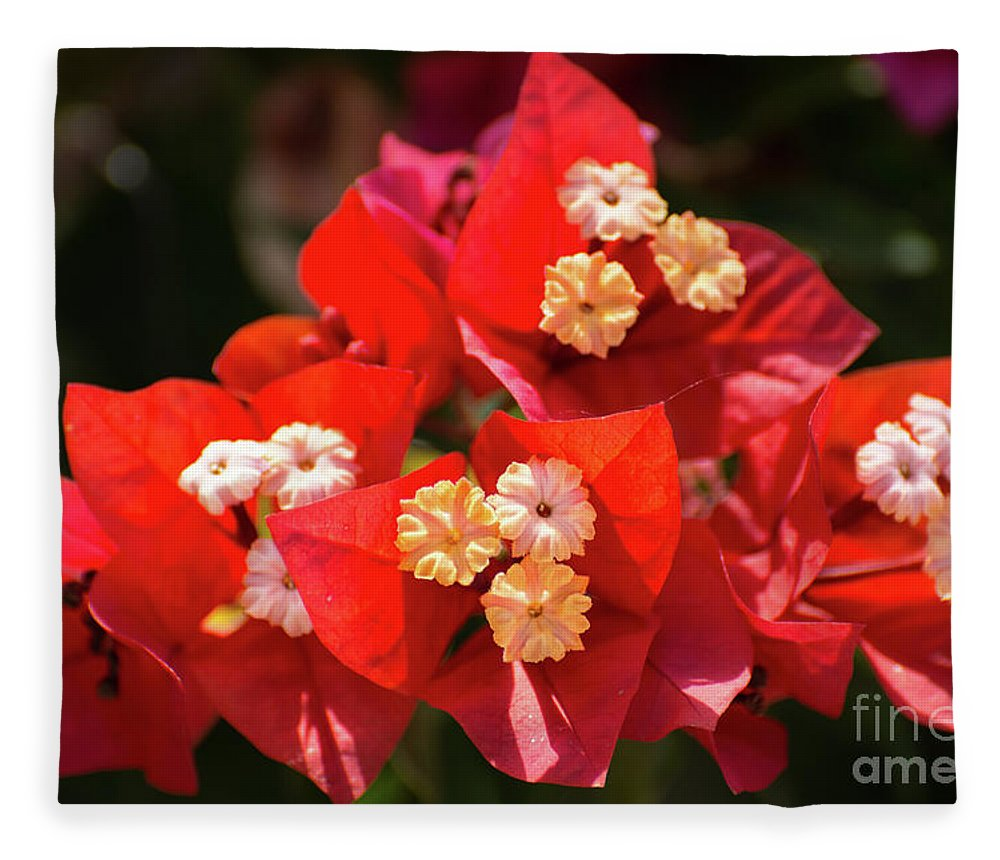 Bougainvillea Fleece Blanket featuring the photograph Red Bougainvillea by Zina Stromberg