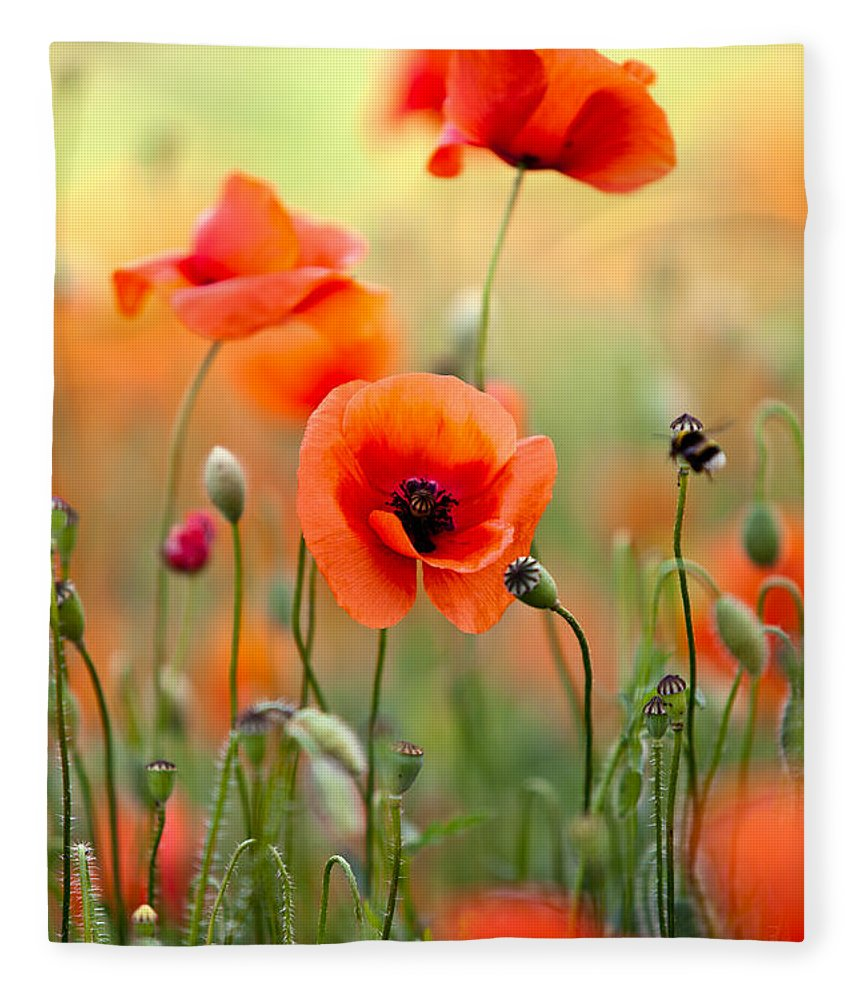 Red corn poppy flowers 06 fleece blanket for sale by nailia schwarz poppy fleece blanket featuring the photograph red corn poppy flowers 06 by nailia schwarz mightylinksfo