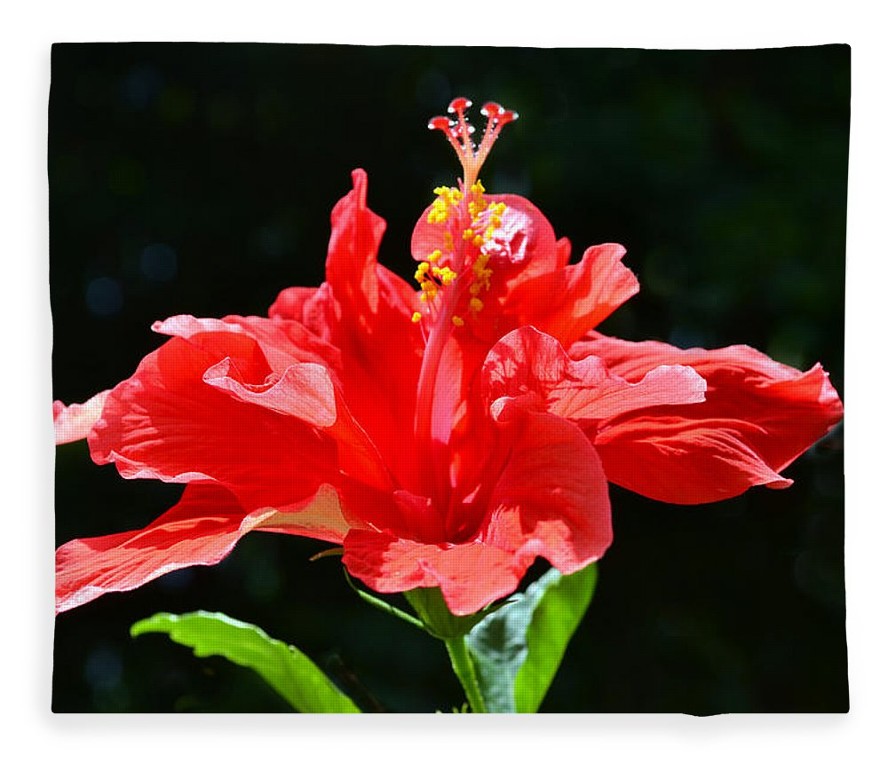 Hibiscus Fleece Blanket featuring the photograph Red by Sandi OReilly
