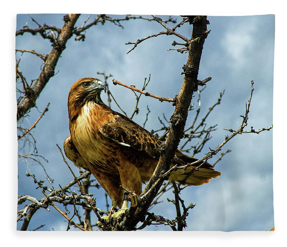 Hawk Fleece Blanket featuring the photograph Red-Tailed Hawk by Alana Thrower