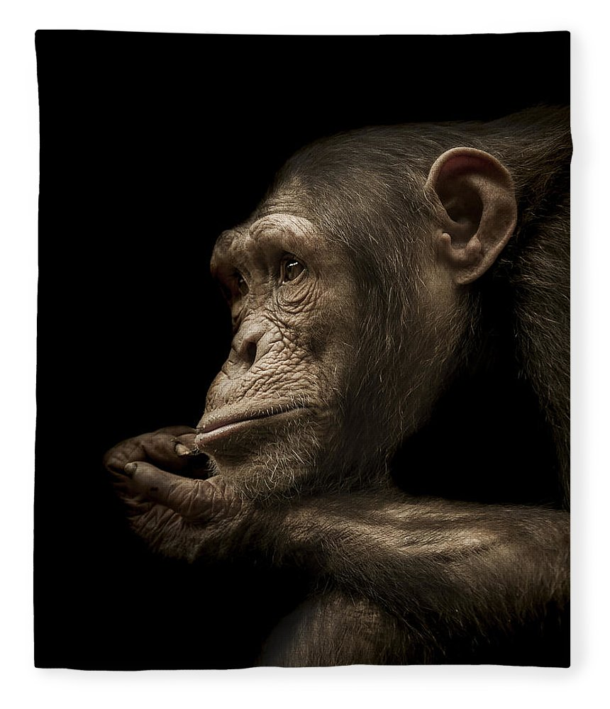 Chimpanzee Fleece Blanket featuring the photograph Reminisce by Paul Neville