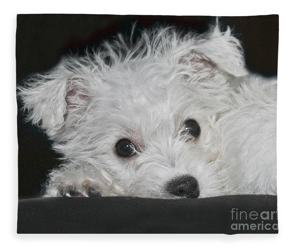 White Fleece Blanket featuring the photograph Resting Puppy by Terri Waters