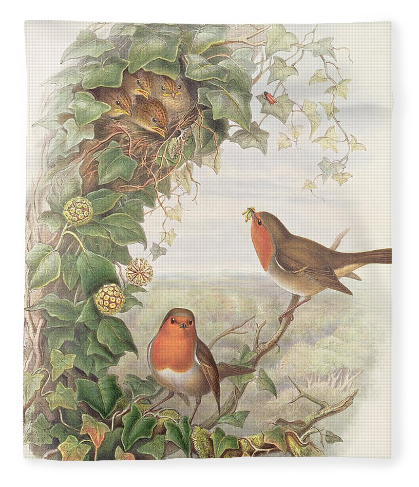 Robin Fleece Blanket featuring the painting Robin by John Gould