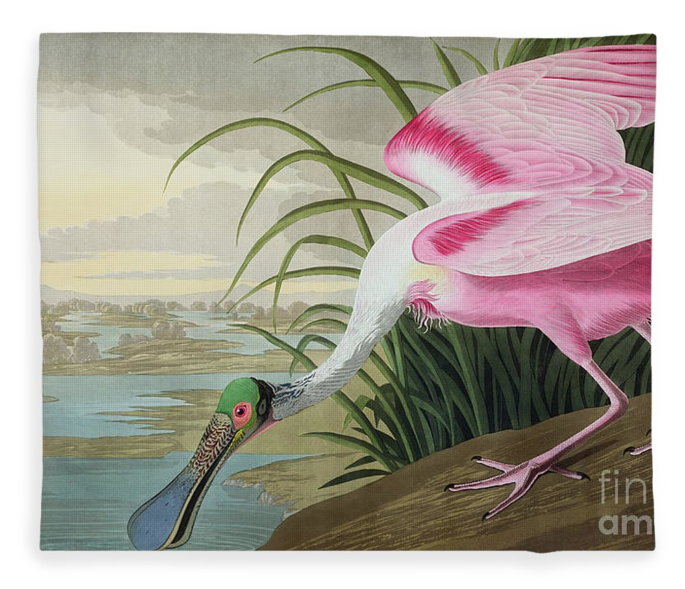 Roseate Spoonbill Fleece Blanket featuring the painting Roseate Spoonbill by John James Audubon