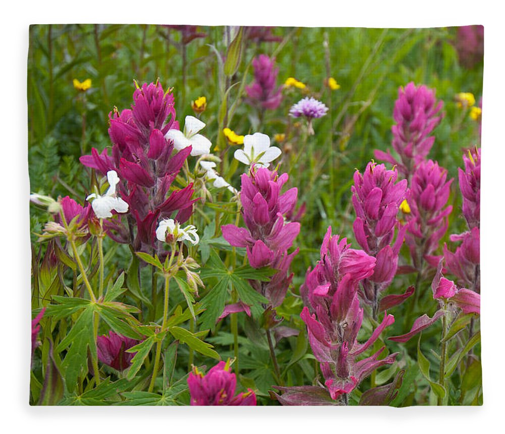 Rosy Paintbrush Fleece Blanket featuring the photograph Rosy Paintbrush Detail by Cascade Colors