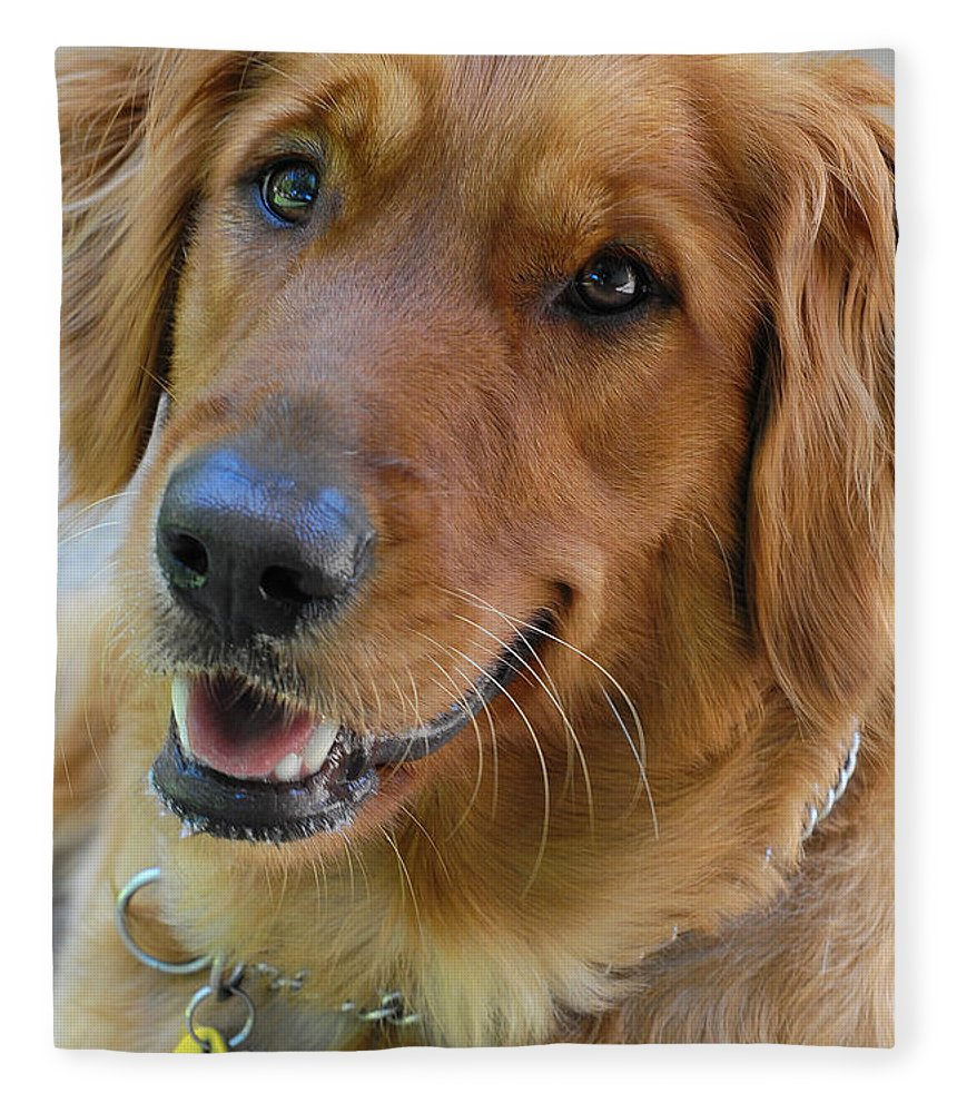 Dog Fleece Blanket featuring the photograph Smiling Sam by Stephen Anderson