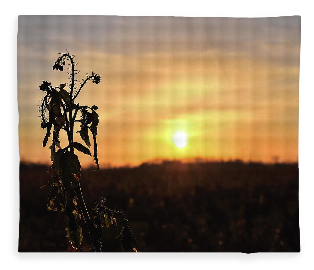 Sonnenuntergang Blume Flowwer Sky Himmel Fleece Blanket featuring the photograph Sonnenuntergang by Scimitarable