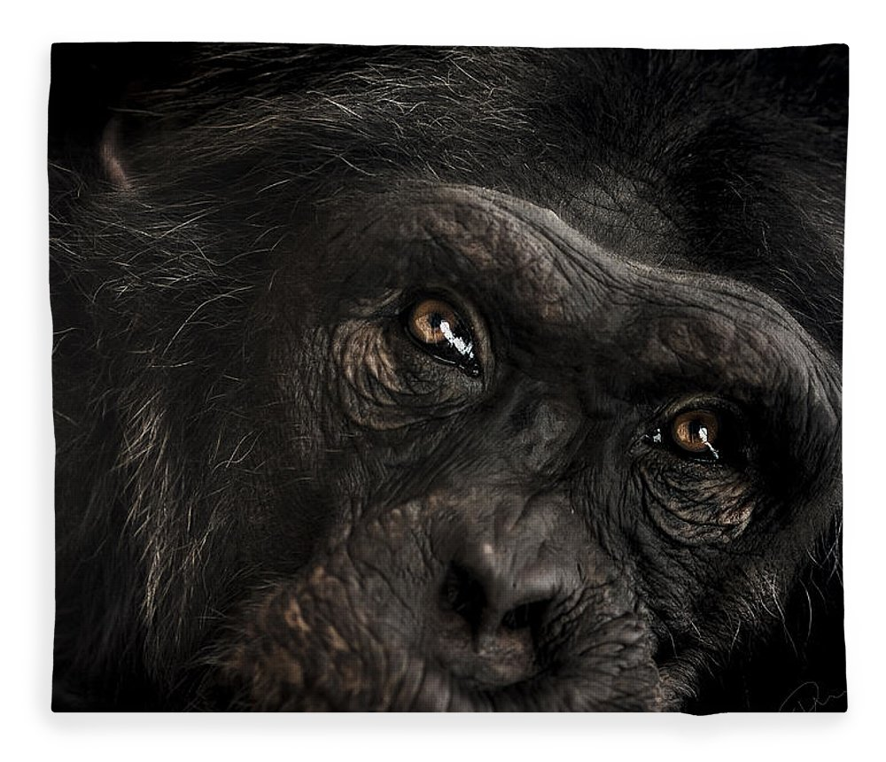Chimpanzee Fleece Blanket featuring the photograph Sorrow by Paul Neville