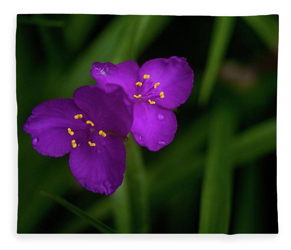 Spiderwort Fleece Blanket featuring the photograph Spiderwort Couple by Douglas Barnett