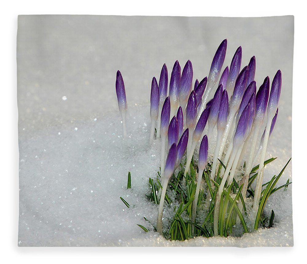 Spring Fleece Blanket featuring the photograph Spring Snow by Lisa Kane